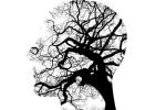 mind&body-faster-brain-F